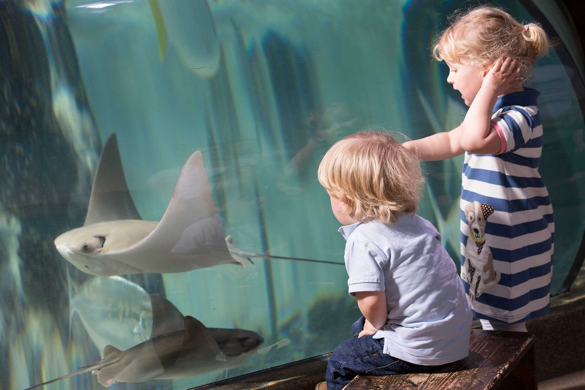 Children pointing at Cownnose Ray at the Sealife Centre Weymouth