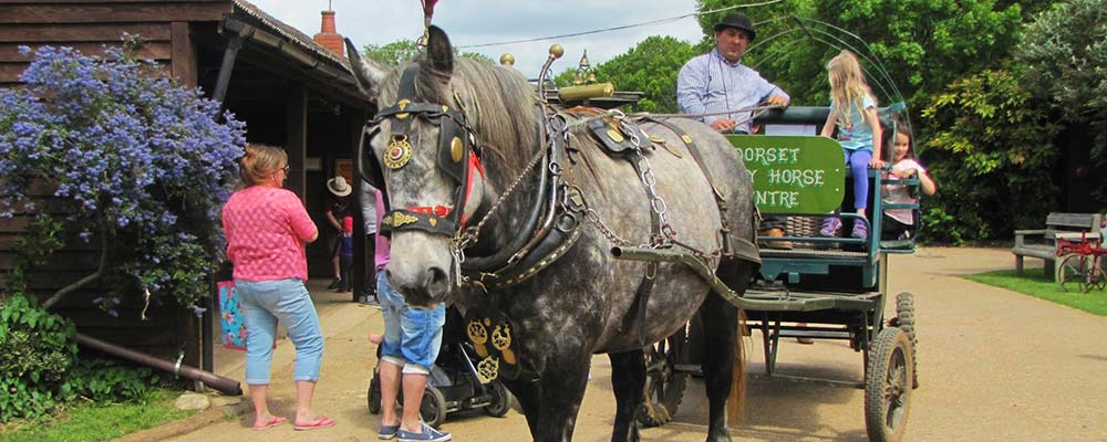 Dorset Heavy Horse Farm Park - Dorset attraction