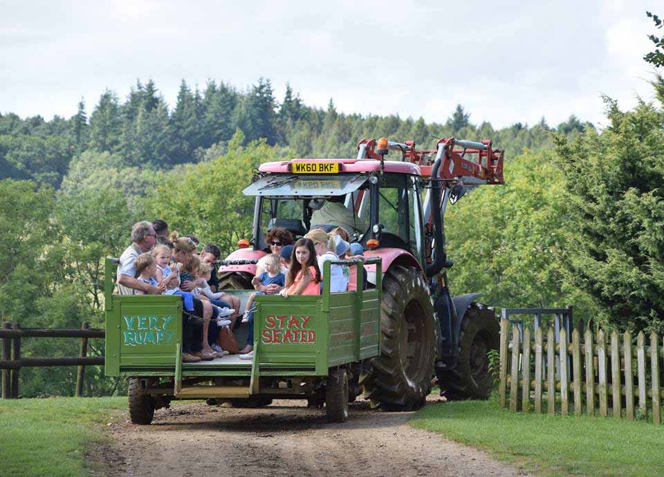 Fun Tractor Rides For The Family At Dorset Heavy Horse Farm Park