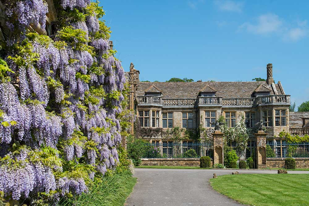 Mapperton House and Wisteria