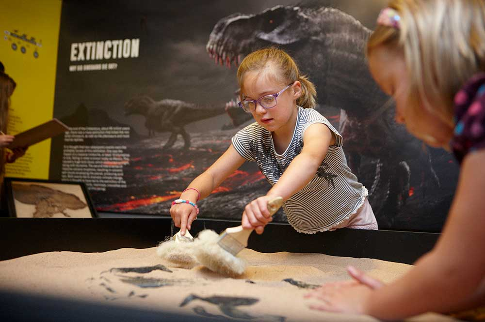 Try out palaeontology at the Dinosaur Museum in Dorset