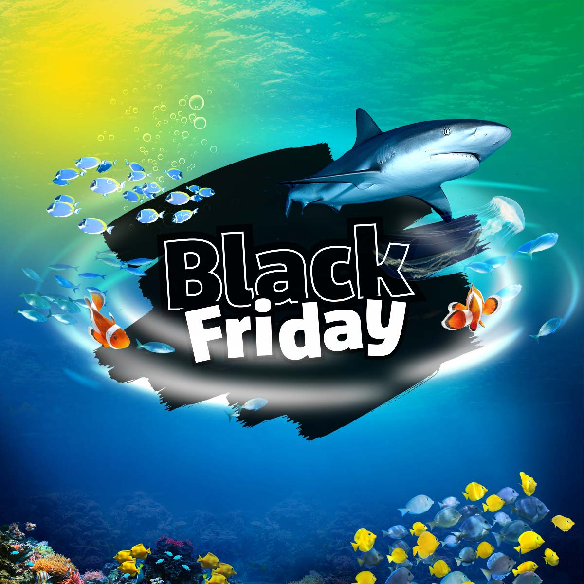 Black Friday At Weymouth SEA LIFE