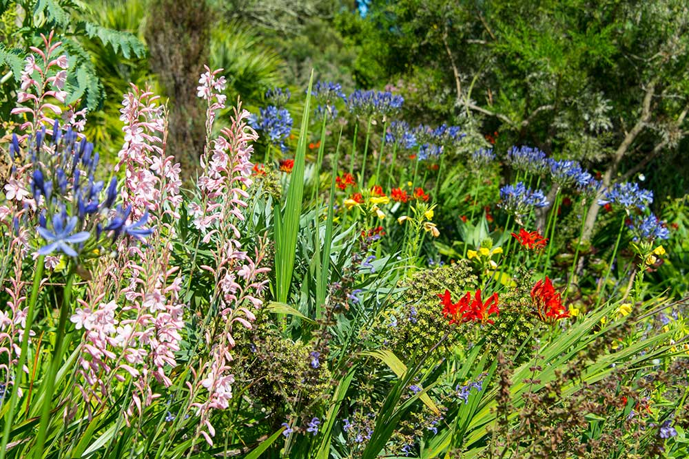Flowers in the Summer at Abbotsbury Subtropical Gardens