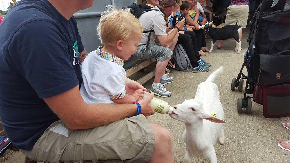 Bottle feeding the goats at Farmer Palmer's Farm Park