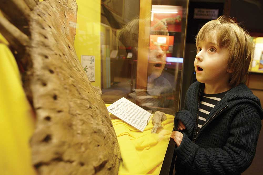 Be amazed at the exhibitions at The Dinosaur Museum