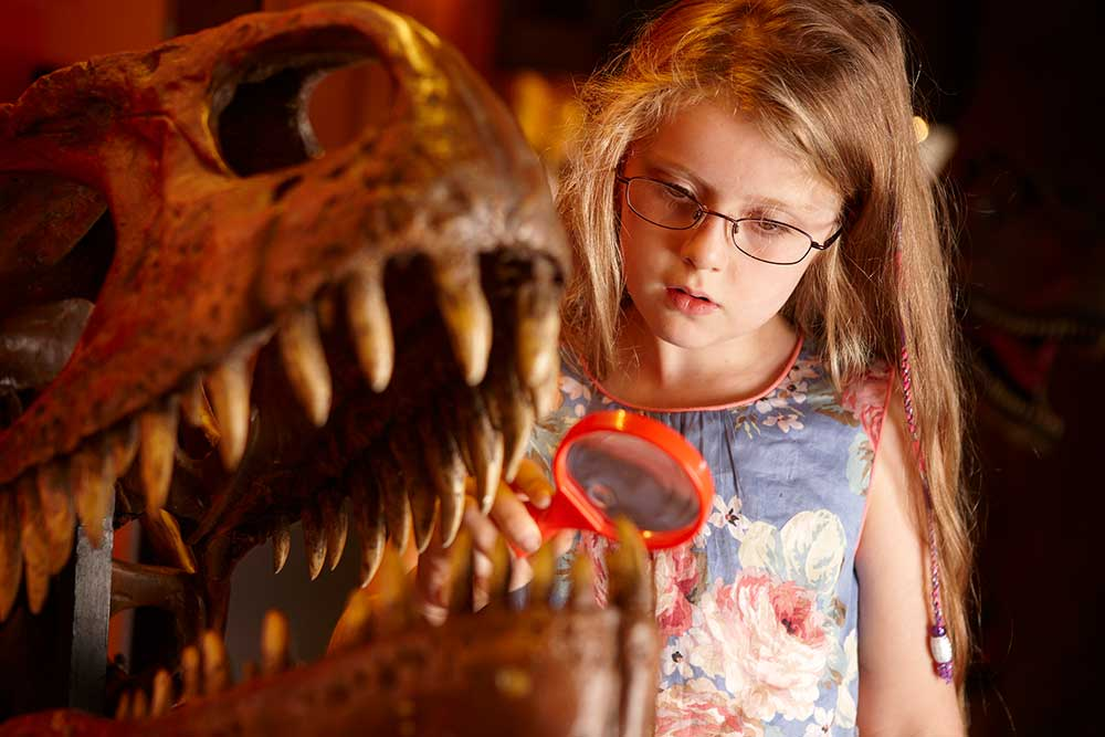 Discover The Dinosaur Museum