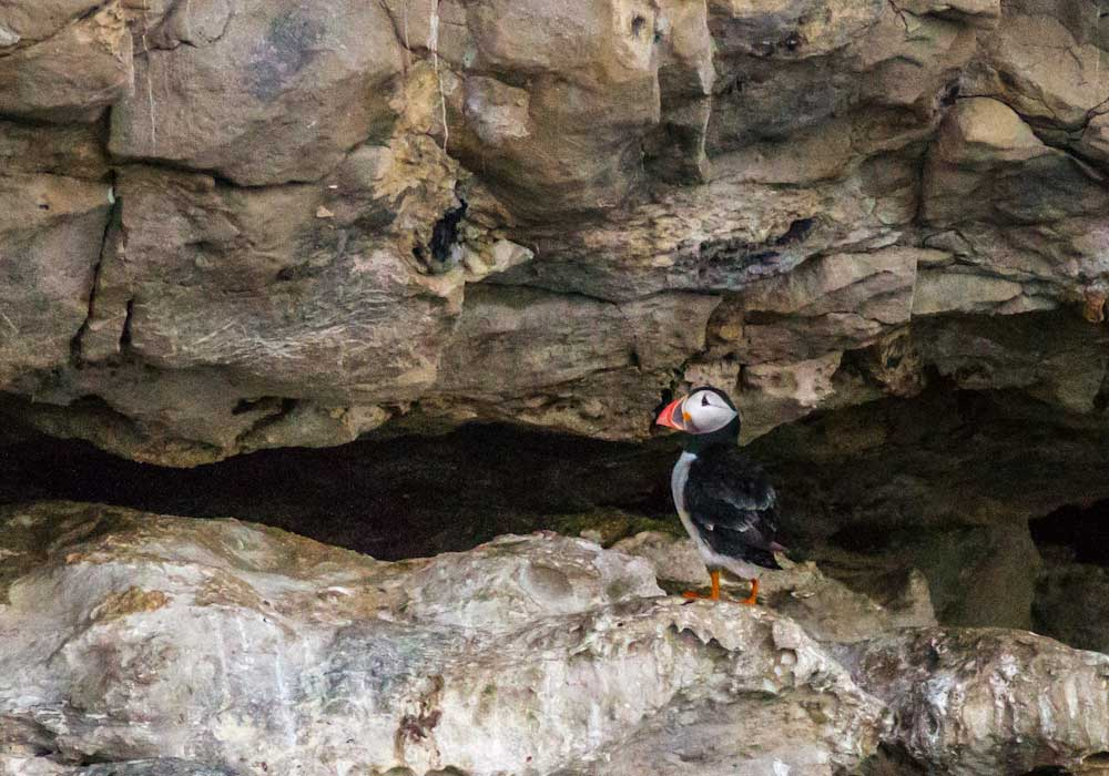 Puffin spotted - City Cruises Poole