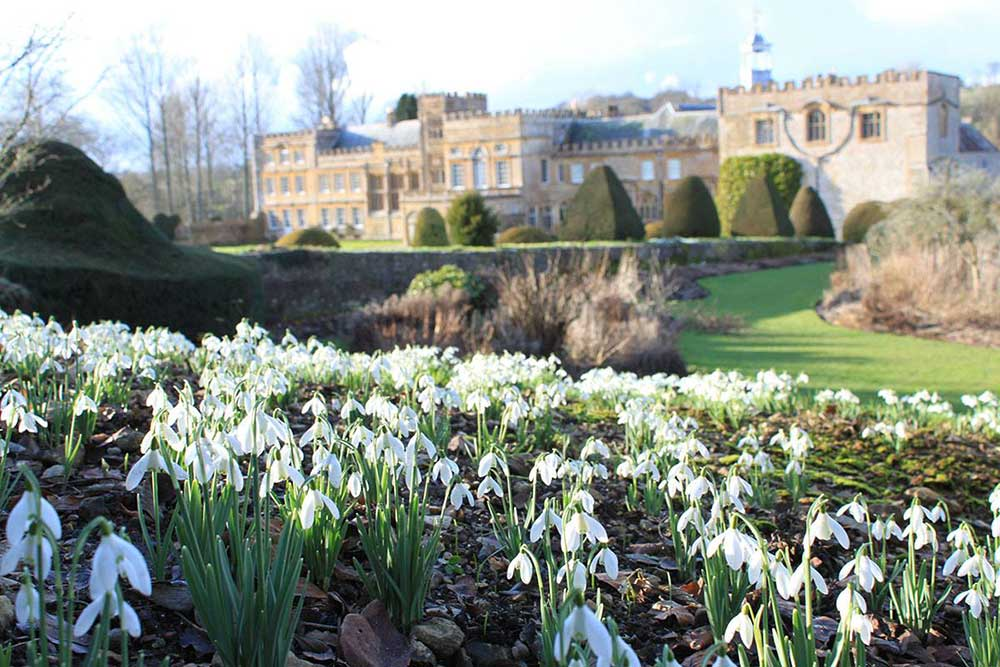 Snowdrop Weekends in February at Forde Abbey