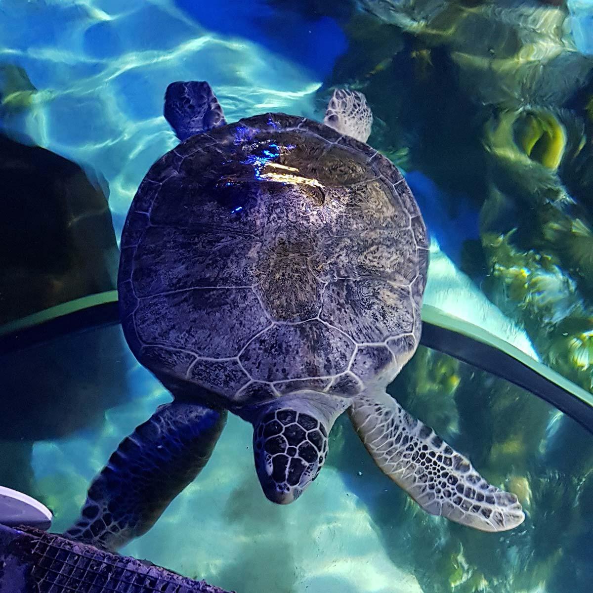 World Turtle Day SEA LIFE Weymouth